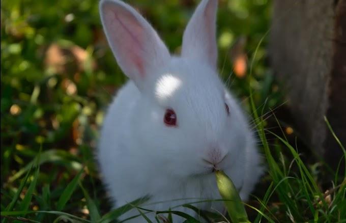 शरारती सफेद खरगोश (Hindi Moral Stories)