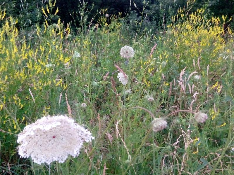 piekna łąka