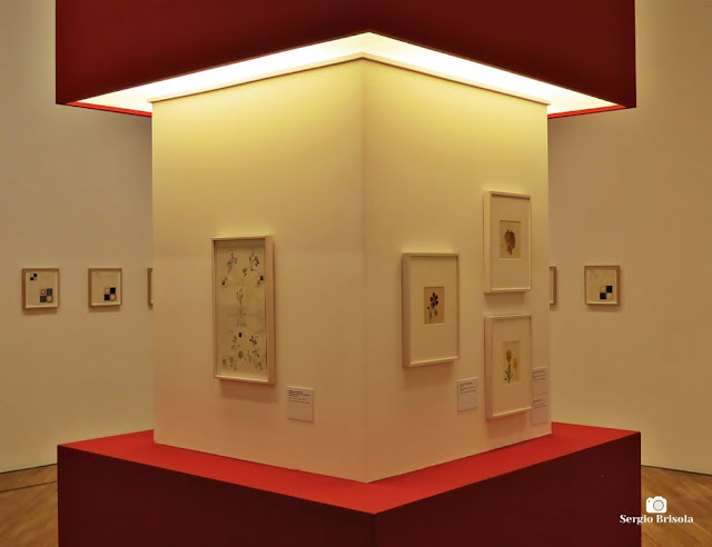 Vista de parte da Exposição Hilma af Klint - Mundos Possíveis - Pinacoteca SP