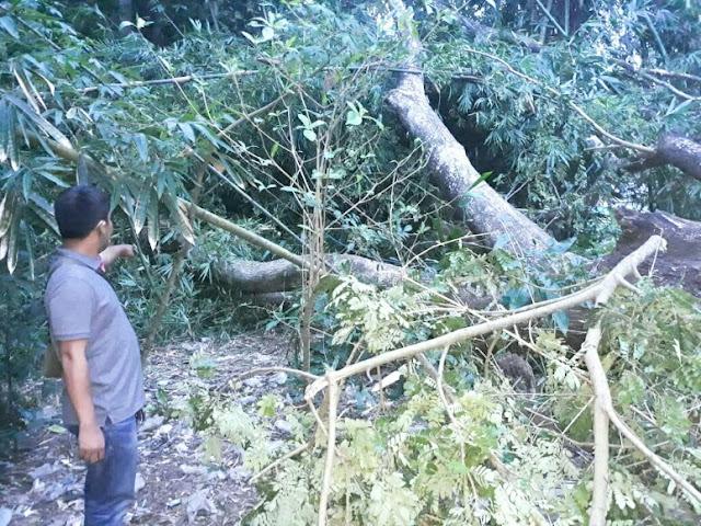 Niat Membantu, Korban Asal Lotim Tewas Tertimpa Pohon