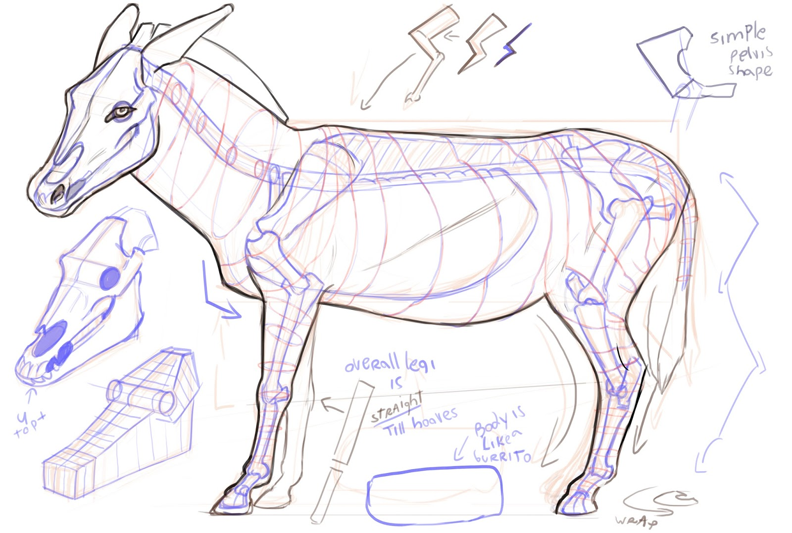 Lonely Studios: Simplified Animal Anatomy Notes