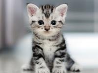 31 Baby Katzen