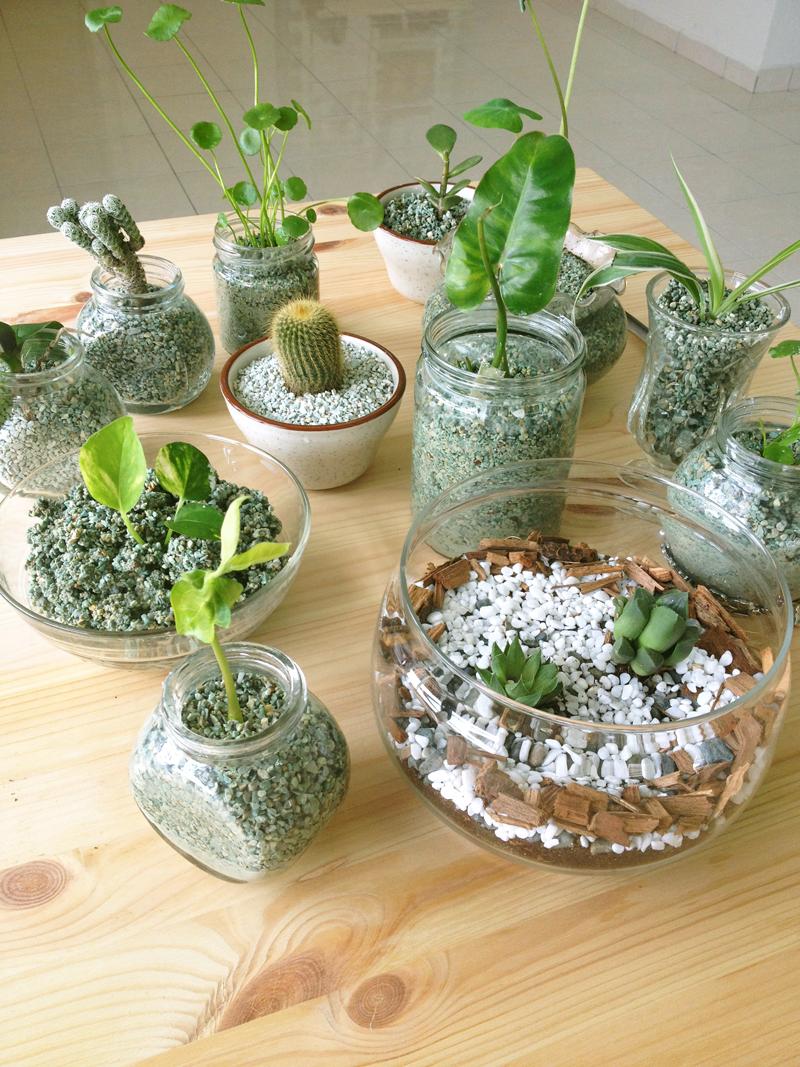 Plant Project : Zeolites & Present | * azreenchan *