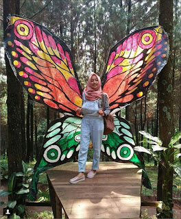 Wisata Bukit Pinus Carang wulung wonosalam.