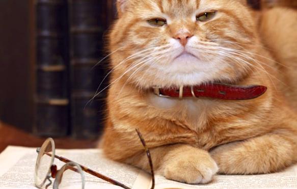 Les chats sont-ils intelligents ?