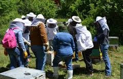 Θέλω να ασχοληθώ με την μελισσοκομία και δεν ξέρω από πού να αρχίσω.
