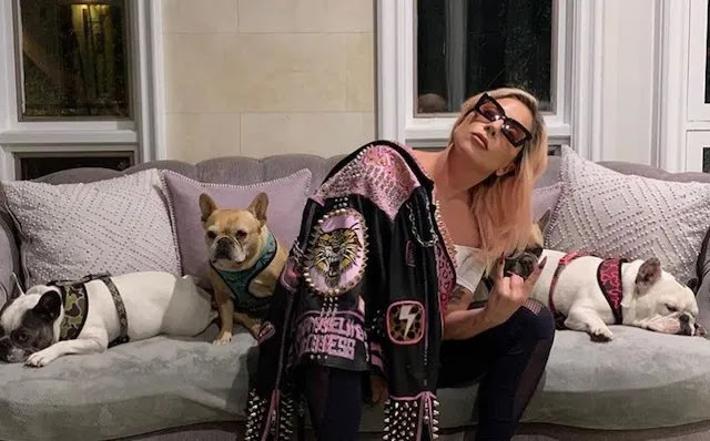 Lady Gaga's dogs found, handed over by mystery woman