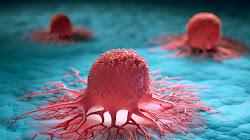 Hệ thống miễn dịch con người thường xuyên tiêu diệt tế bào ung thư khi thỉnh thoảng nó hình thành