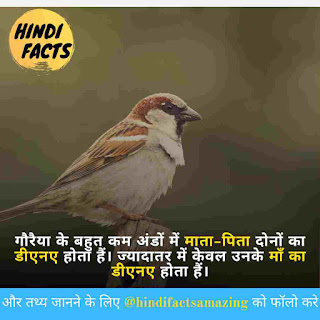 amazing facts about sparrow