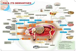 Inilah Manfaat Daging Babi Bagi Kesehatan dan Kecantikan