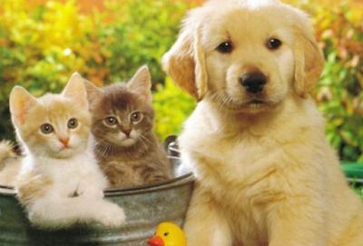 Можно ли заразиться коронавирусом от домашних животных?