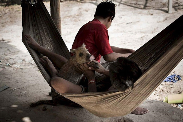 Bí ẩn bộ tộc kỳ lạ ở Amazon nhận động vật hoang dã làm con