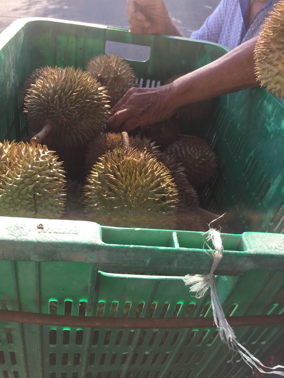 buah durian sedap, musim buah, buah-buahan tempatan, buah murah