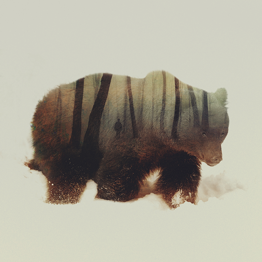 05-Grizzly Bear-Andreas-in-Lie-Animals-Photographic-Double-Exposures-www-designstack-co