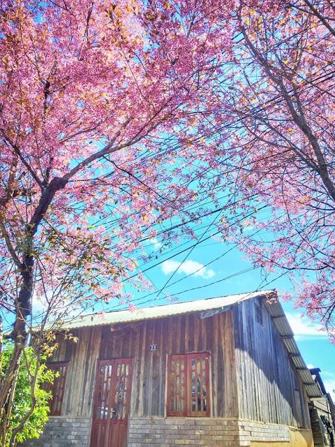 Chiêm ngưỡng vẻ đẹp tuyệt trần của vùng ngoại ô Đà Lạt 15