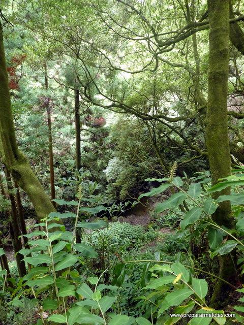 naturaleza en las islas Azores, senderismo
