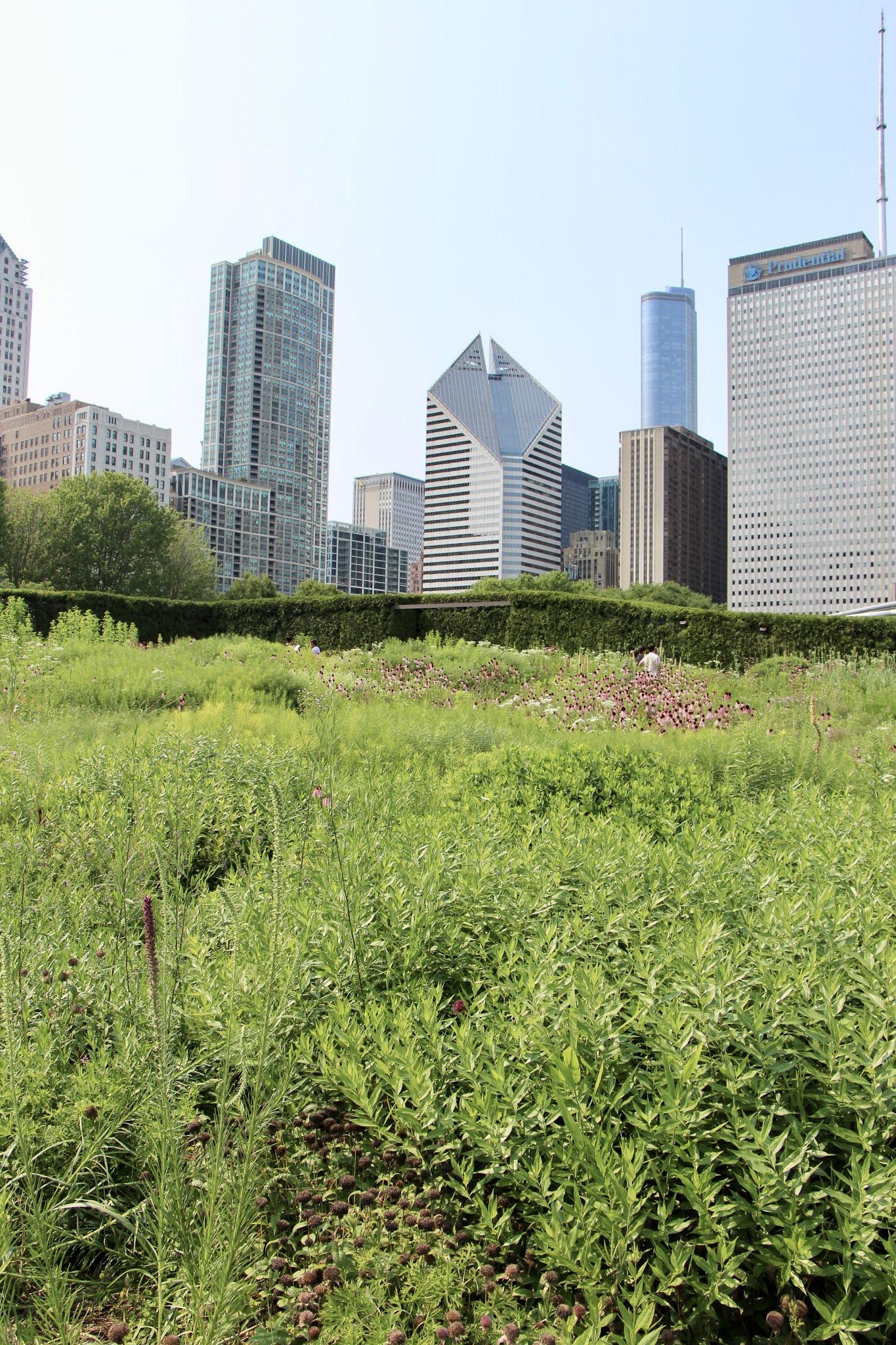 chicago gardens, the loop, explore chicago