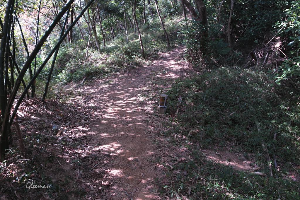 第三個岔路,仍是取右徑沿山稜線走。