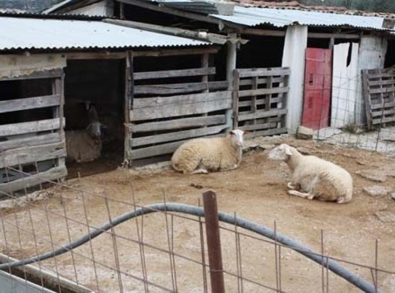 Ξάνθη: Σκύλος έπνιξε 14 ζώα σε κτηνοτροφική μονάδα
