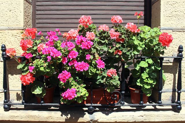 Window flowers in Bilbao, Spain - London travel blog