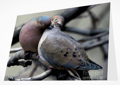 This is a screen shot of a card which I'm selling on Fine Art America. It features two very amorous Mourning doves. Info re this card is @ https://fineartamerica.com/featured/cooing-mourning-doves-2-patricia-youngquist.html?product=greeting-card
