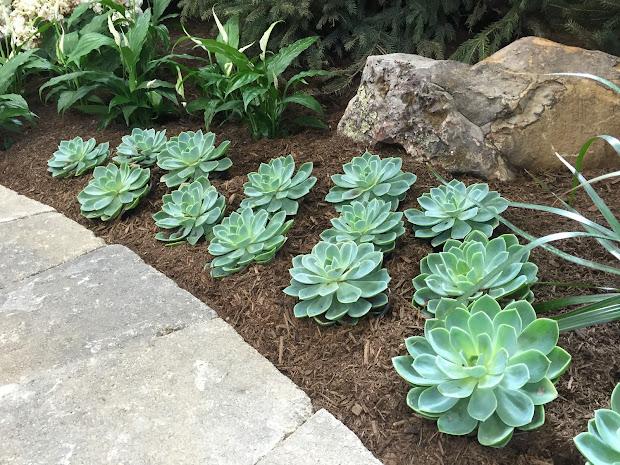 succulents 2015 indiana