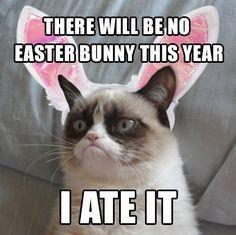 Best Cat Memes 4