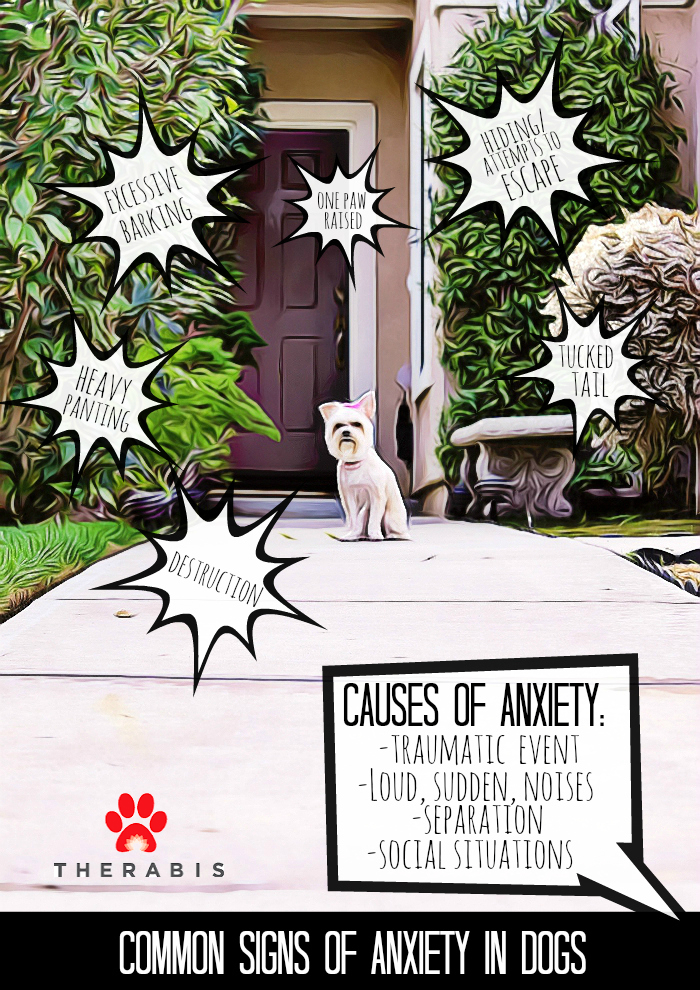 Causes and Signs of Anxiety in Dogs: Help treat anxiety naturally with Therabis supplements for dogs #AD
