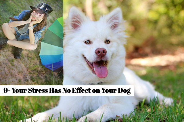 Avoid working with your dog when you're stressed. Use this time to relax or play games that may lighten your mood before you train or do other work with your pet.