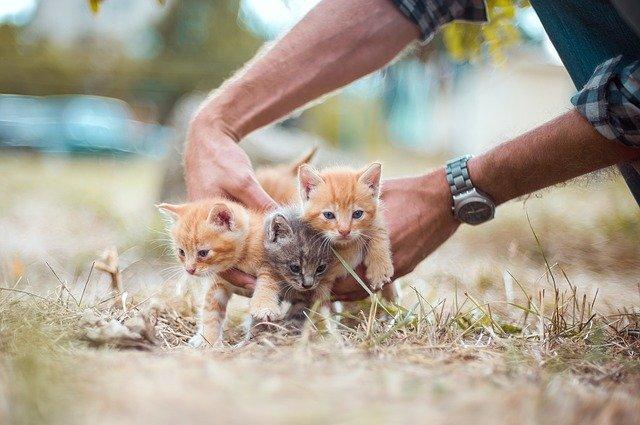 Hasil Penelitian Menunjukkan Manfaat Memelihara Kucing, dari manfaat kesehatan hingga kecerdasan