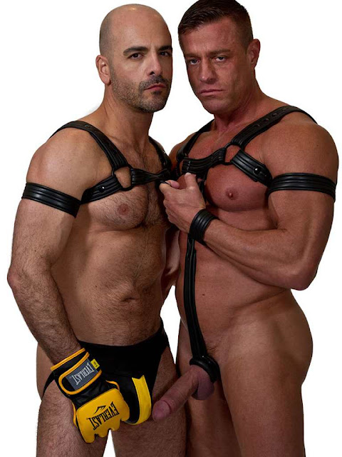 665 Leather Bulldog Neoprene Harness Gayrado Online Shop