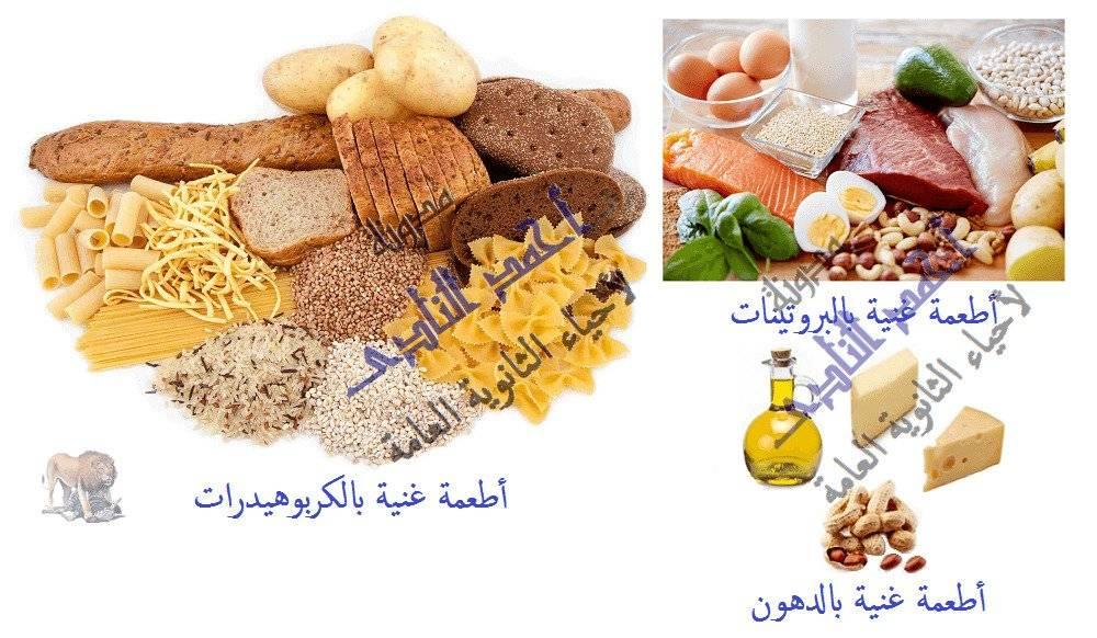 التغذية الغير ذاتية فى الكائنات الحية - الكربوهيدرات - البروتينات - الدهون  - مدونة أحمد النادى لأحياء الثانوية العامة