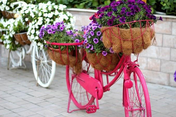 اجمل 10 صور حديقة الزهور دبي