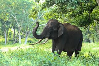हाथी के बारे में जानकारी information About Elephant in hindi