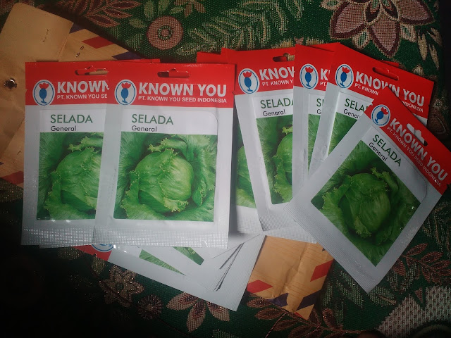 Selada Crop Head Lettuce
