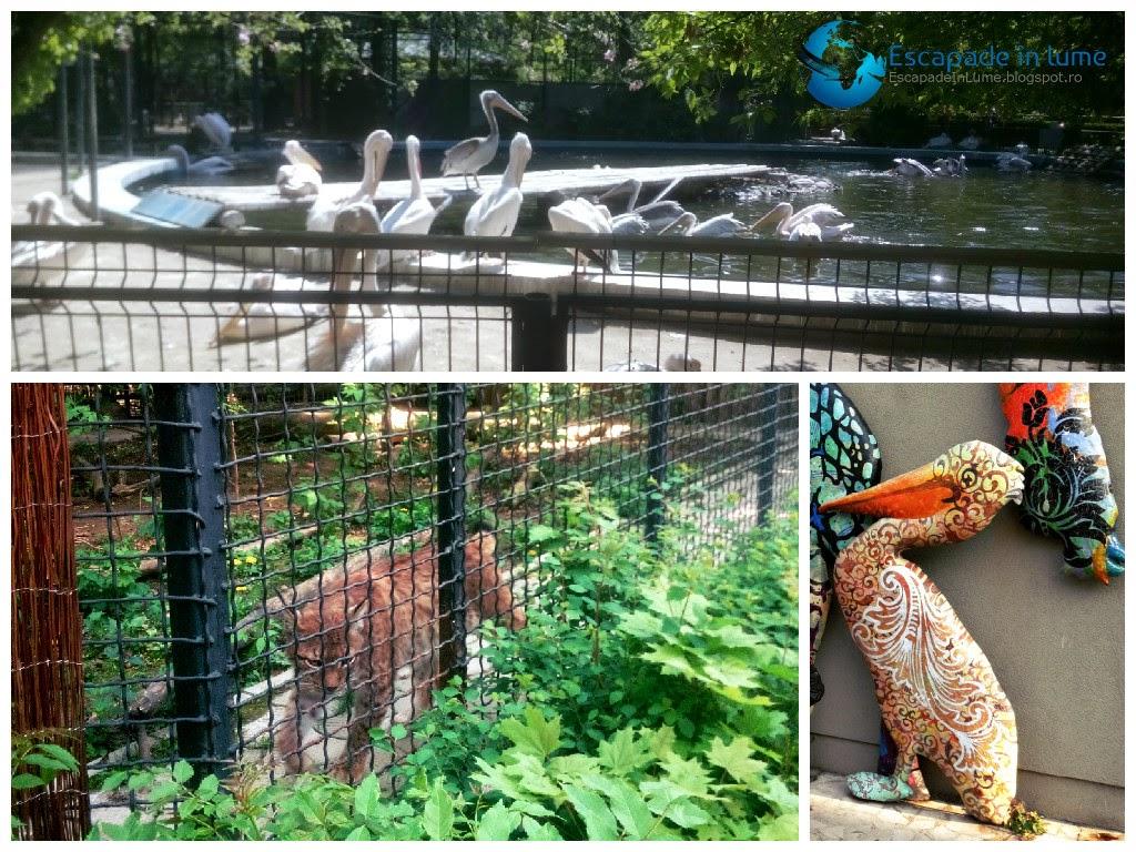 Escapade In Lume In Plimbare La Zoo Băneasa