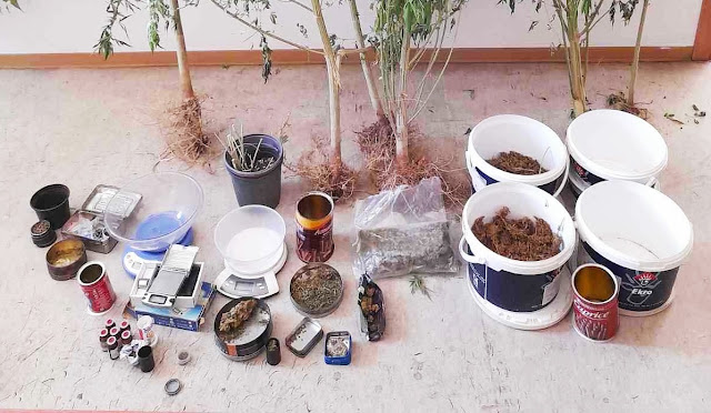 Αργολίδα: Σύλληψη στο Κρανίδι για καλλιέργεια κάνναβης