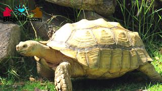 Cara merawat kura-kura dengan mudah