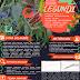 APLIKASI EKSTRAKSI FERMENTASI LEGUNDI (Vitex trifolia L.) SEBAGAI BIOAKTIVATOR ALAMI DALAM MERANGSANG PERTUMBUHAN BIBIT TANAMAN CABAI BERDASARKAN WAKTU SECARA IN VITRO