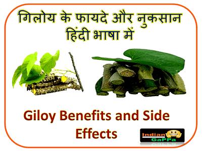 गिलोय-के-फायदे-और-नुकसान-इन-हिंदी,गिलोय-के-फायदे,Giloy-Benefits,Giloy-Ke-Fayde,Benefits-of-Giloy,Giloy-Ke-Fayde-In-Hindi