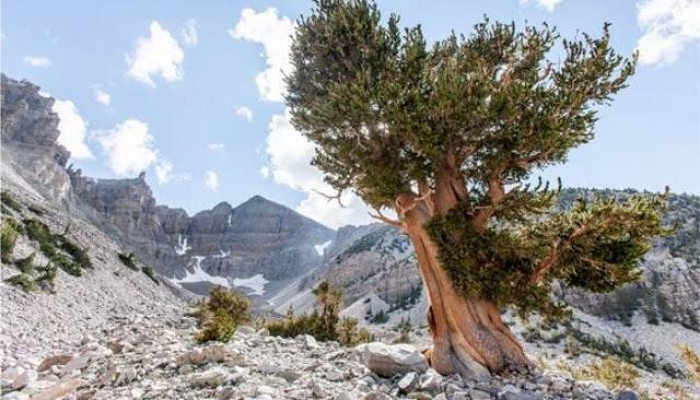 Самый старый живой организм на планете