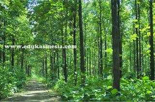 6 Peranan Tumbuhan (Plantae) Bagi Lingkungan dan Manusia