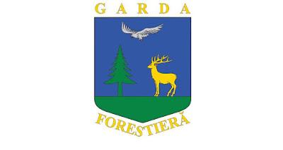 erdőgazdálkodás, Románia, Országos Erdészeti Felügyelőség, illegális fakitermelés,