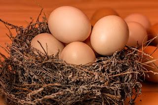 Bird nest full of brown eggs