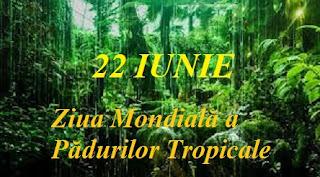 22 iunie: Ziua Mondială a Pădurilor Tropicale