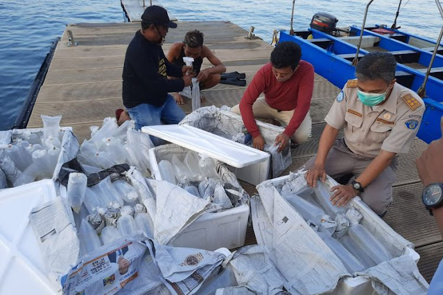 Eksportir Gagal Kirim Benih Lobster, Potensi Kerugian Ditaksir Rp10 Miliar