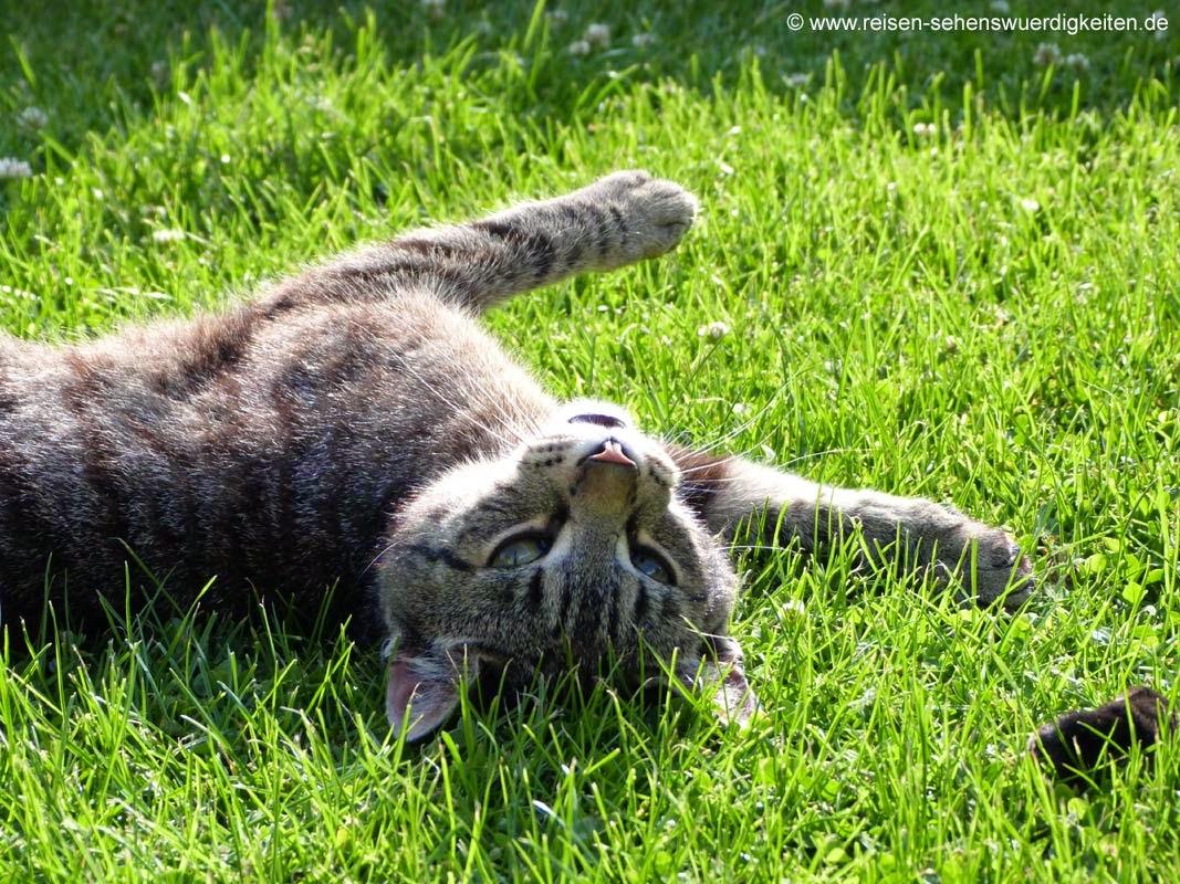 Katze im Gras wartet auf Belohnung