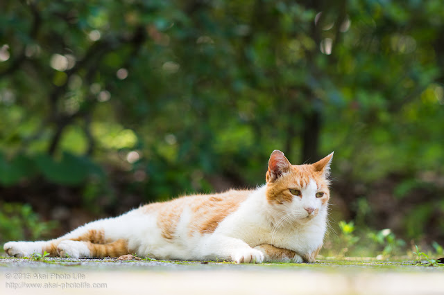 こんな人間いるよねって感じの猫 むくっ、「いやせっかくの休日・・・ちょっと外出でもするか」