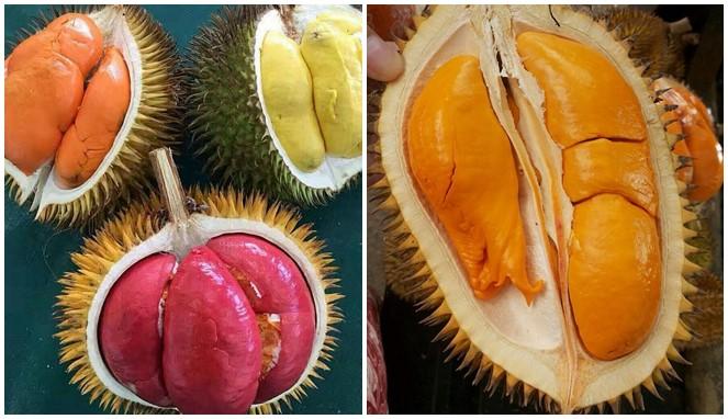 Jenis Jenis Durian Popular Dan Sedap Yang Wajib Anda Tanam Di Kebun My Info Berita