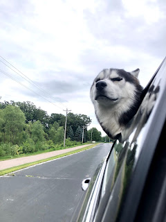 The husky pup, Ullr, riding in the car with his head out the window. Eyes closed, ears back in the wind, and a smile on his face.